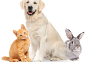 5 Reasons You Should Have Health Insurance For Your Pet