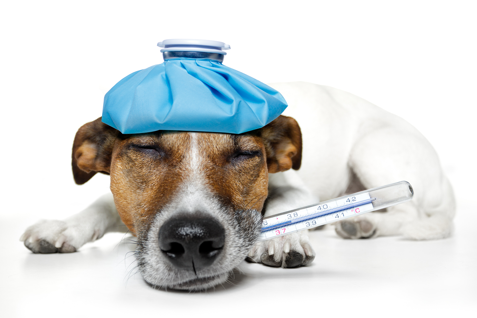 Cheap Animal Health Insurance - Why Cheap Animal Health Insurance is a Must For Your Pets