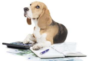 Pet Care Insurance - Is it a Policy For Good Health?