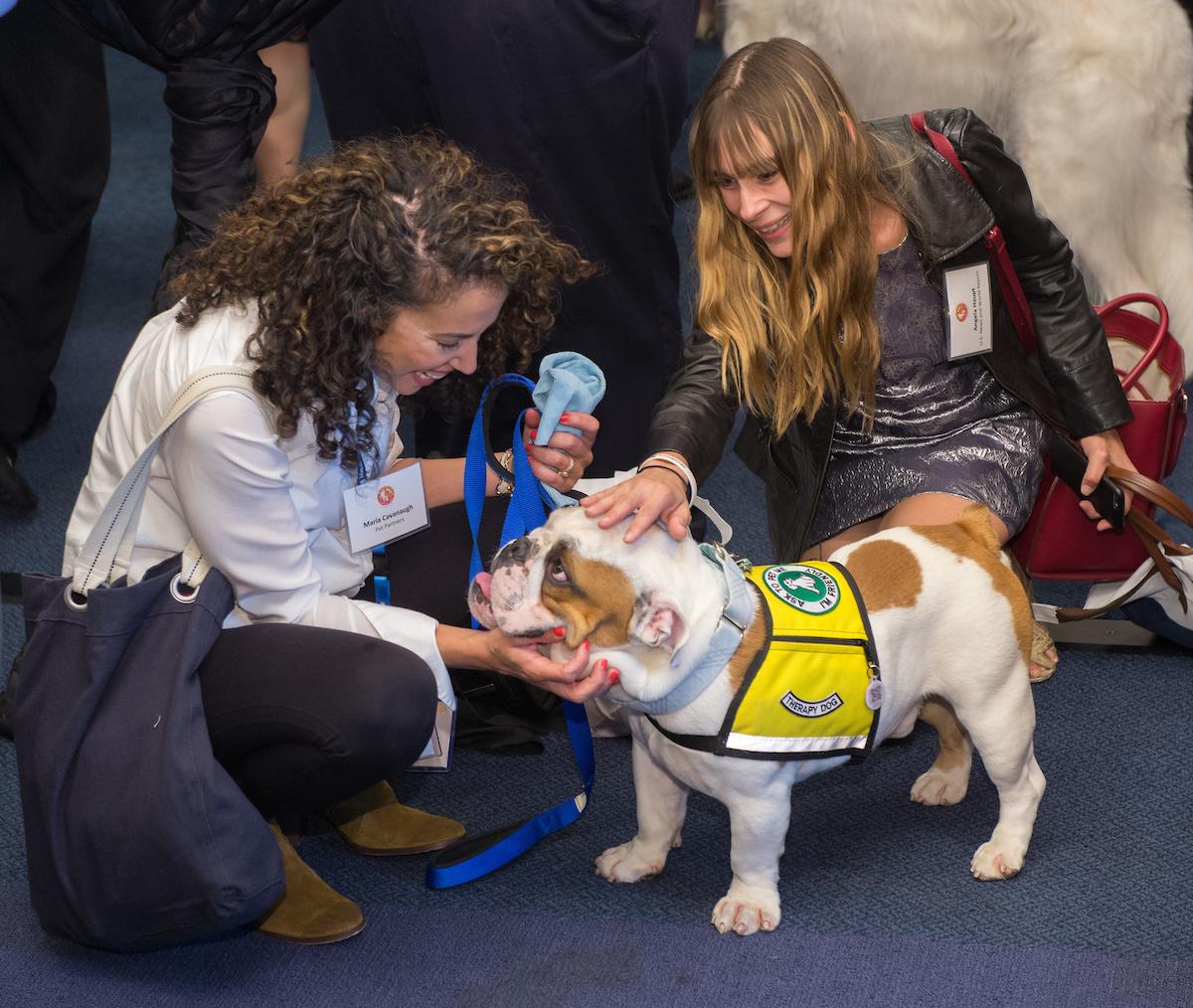 Pet Health Insurance - Where Do You Turn For Advice?