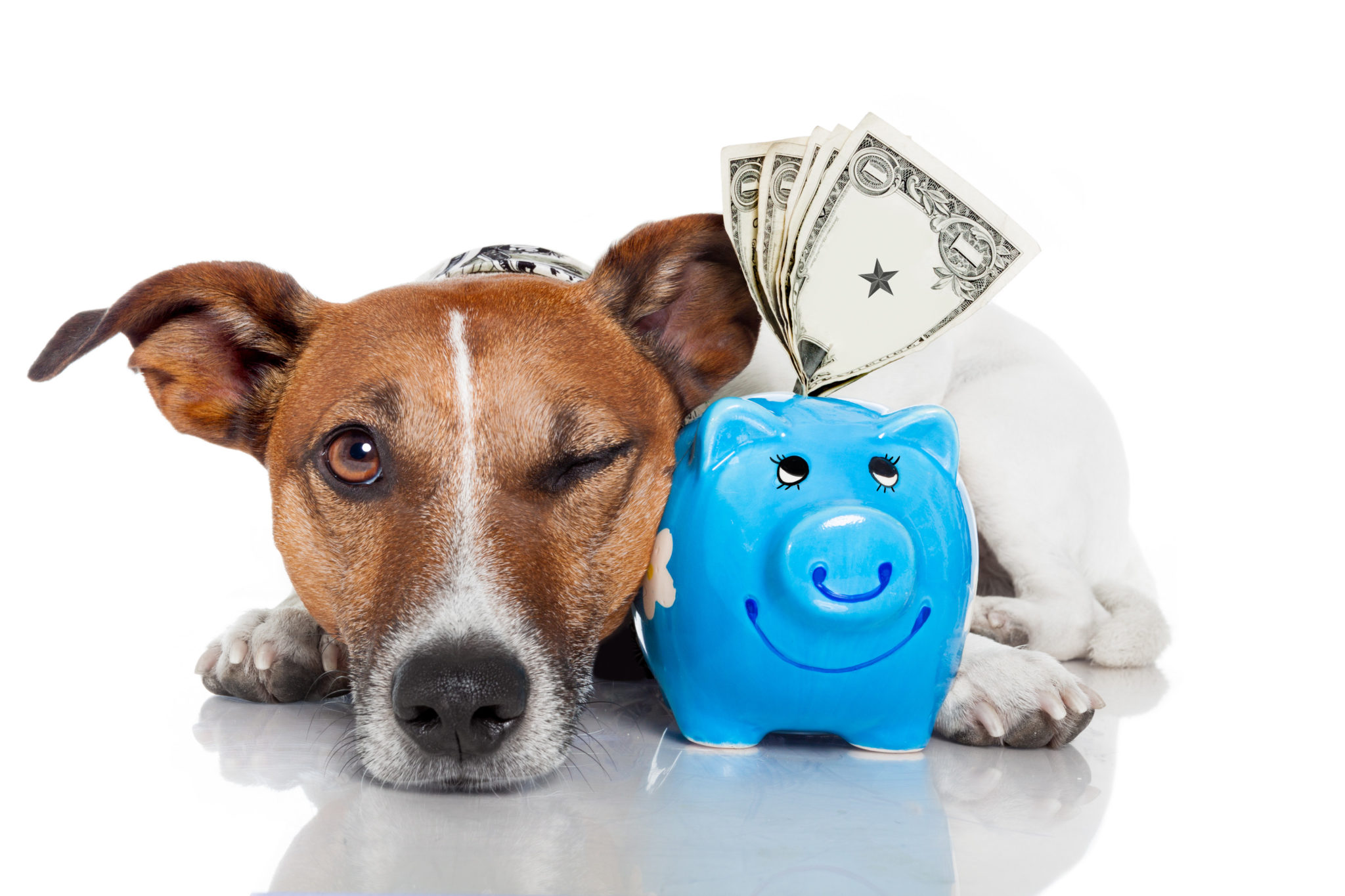 Pet Insurance - Is it For You?