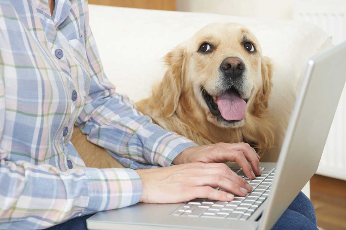 Reducing Your Pet Insurance Premium