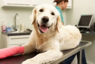 What You Need to Know Before Getting Pet Insurance